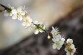 冬之花:DSC06808.JPG