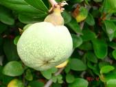 水果總彙:DSC05504.JPG