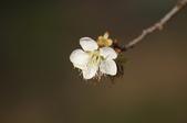 冬之花:DSC06809.JPG