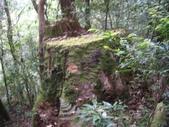 20130302_水漾森林:IMGP0017.JPG