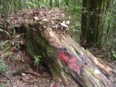 20130302_水漾森林:IMGP0018.JPG