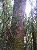 20130302_水漾森林:IMGP0023.JPG