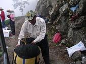 981107 冬茶採收:IMGP0046.JPG