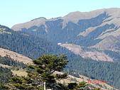 20081130登奇萊北峰:DSC06628.JPG