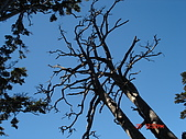 20081130登奇萊北峰:DSC06630.JPG