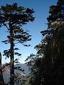 20081130登奇萊北峰:DSC06631.JPG