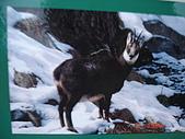 2008瑞士滑雪:DSC04725.jpg