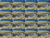20081130登奇萊北峰:DSC06600.JPG