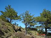 20081130登奇萊北峰:DSC06605.JPG