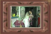 我聽見幸福的聲音!:結婚影片 (30).jpg
