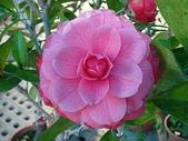 2011 農曆春節:2011 農曆春節 (372).JPG