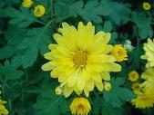 2011 農曆春節:2011 農曆春節 (368).JPG