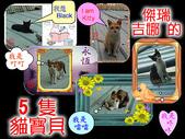 photo 作品:5隻貓寶貝.jpg