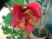 2011 農曆春節:2011 農曆春節 (374).JPG