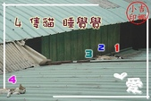陽台下的新嬌客-咚咚:小咚咚 (44).JPG