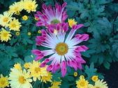 2011 農曆春節:2011 農曆春節 (369).JPG