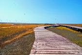 2014年第41周第42周紀錄:20141017高美濕地4