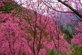 2015年第7周第8周紀錄:20150221三峽竹崙櫻花園