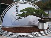 統一健康世界--五葉松養生餐:五葉松季.JPG
