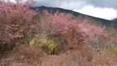 20130213武陵賞趣:DSC_0195.jpg