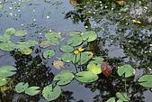 遊後慈湖:DSC_0742.JPG