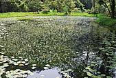 遊後慈湖:DSC_0737.JPG