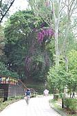遊後慈湖:DSC_0808.JPG