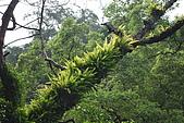 遊後慈湖:DSC_0726.JPG