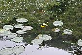 遊後慈湖:DSC_0740.JPG