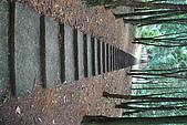 遊後慈湖:DSC_0914.JPG