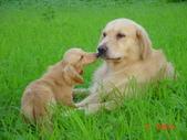 我家的狗狗:1122512321.jpg