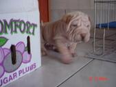 我家的狗狗:1122512317.jpg