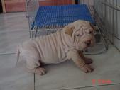 我家的狗狗:1122512318.jpg