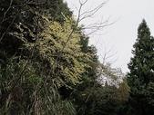 4-4  雪見--雪霸國家公園雪見遊憩區:101-0221 雪見--山胡椒 (16).jpg