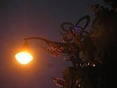 6-1  藍山生活:公路花園的黃昏 08.JPG