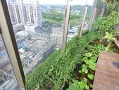 陽台上種大樹 -- 若山:105-1021 綠建築新工法審查--若山 (21).jpg