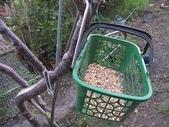 7  藍山園藝:101-1112  自然餵鳥 (8).jpg