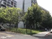 107-1003 松樹搶救及棲地改善(研三館) :