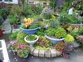 7  藍山園藝:105-0630 藍山園藝  (6).jpg