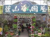 2-1  植生綠牆-花牆-立面綠化-垂直綠化-植生牆:綠牆--立面綠化--藍山園藝  DSCN16