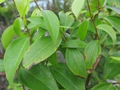 9-5  園藝技術 -- 施肥:104-0227-2  肥料試驗-八寸盆100克 (5).jpg