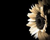 5-5  花:1124.jpg