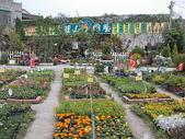 7  藍山園藝:藍山園藝    草花區2714