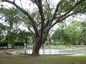 樹木基盤改善--台北列管老樹816號:105-1020 樹木基盤改善--台北列管老樹816號 (2).jpg