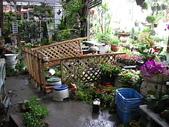 7  藍山園藝:961007 藍山園藝--科羅莎颱風DSCN9370