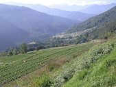 4-6  雪山--五月賞杜鵑:DSCN7632 武陵農場的高麗菜田