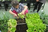 1-4  屋頂菜園 -- 竹南營盤社區之社區營造屋頂菜園:103-1127  營盤社區屋頂菜園--審查及收成 (48).jpg
