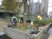 樹木棲地改善--麗池公園土壤透氣工法:104-1221 麗池--透氣工法 (6).jpg
