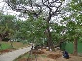 樹木棲地改善--麗池公園土壤透氣工法:104-1223 麗池--透氣工法 (13).jpg