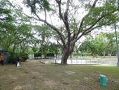 樹木基盤改善--台北列管老樹816號:105-1020 樹木基盤改善--台北列管老樹816號 (1).jpg